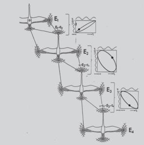 Gjess bruker EMF til å holde rett avstand og posisjon i flokken under flukt. De har sensorer i nebbene.  Copyright: Warnke 1989